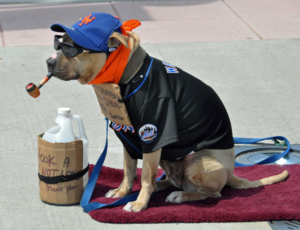 Dog_in_shirt_NY_Mets-600px